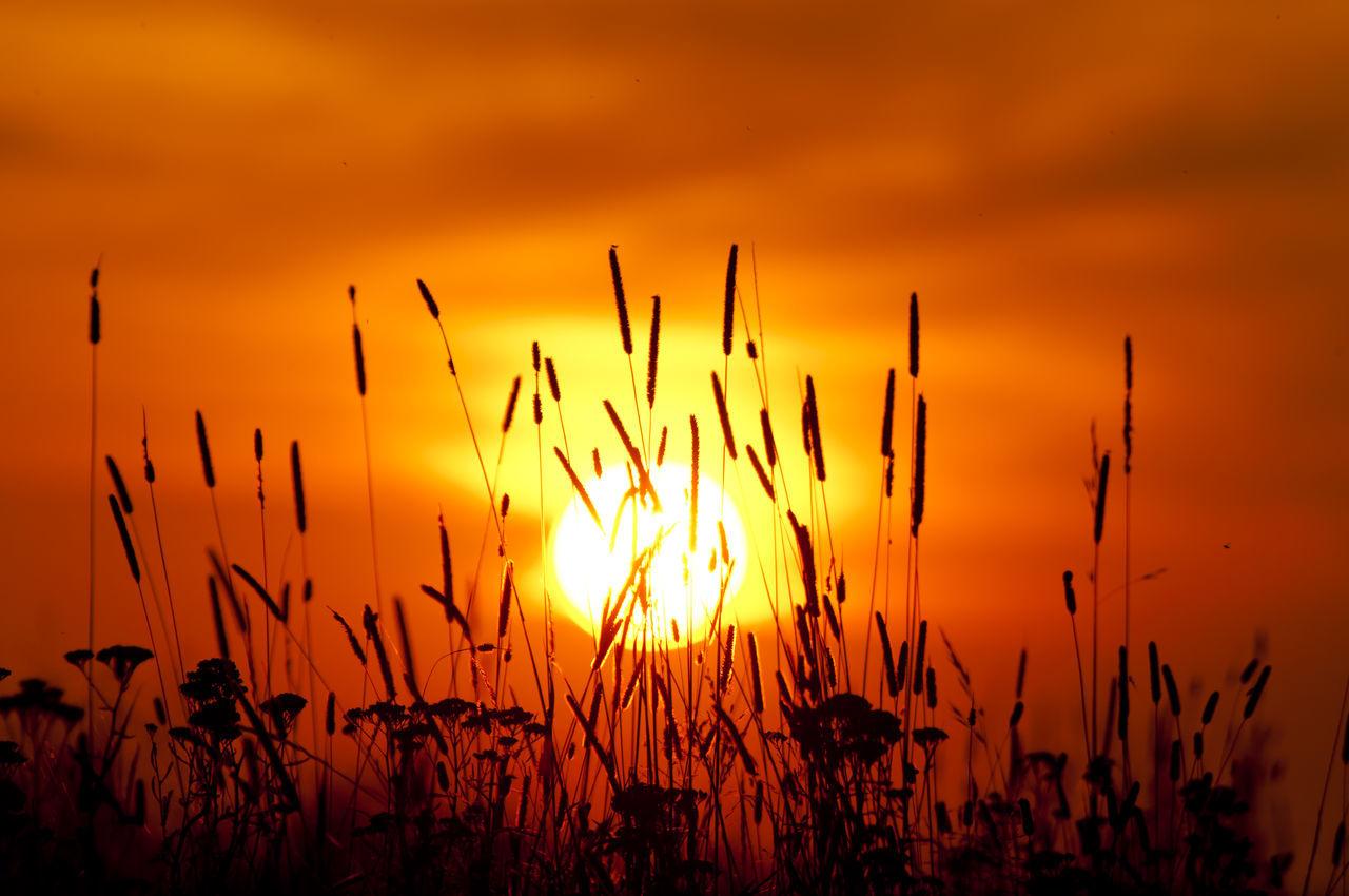 Tall Grass Sunset Orange Sunset Poland Nature Plant Rural Scene Sunset Tall Grass