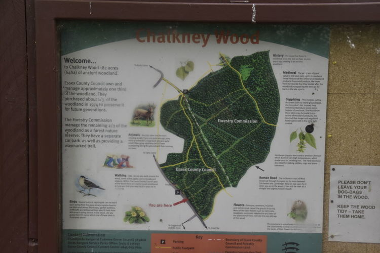 Chalkney Wood Close-up Communication Day Earls Colne Essex Indoors  Leaf Map No People WoodLand Woodland Walk Woodland Walks Woods