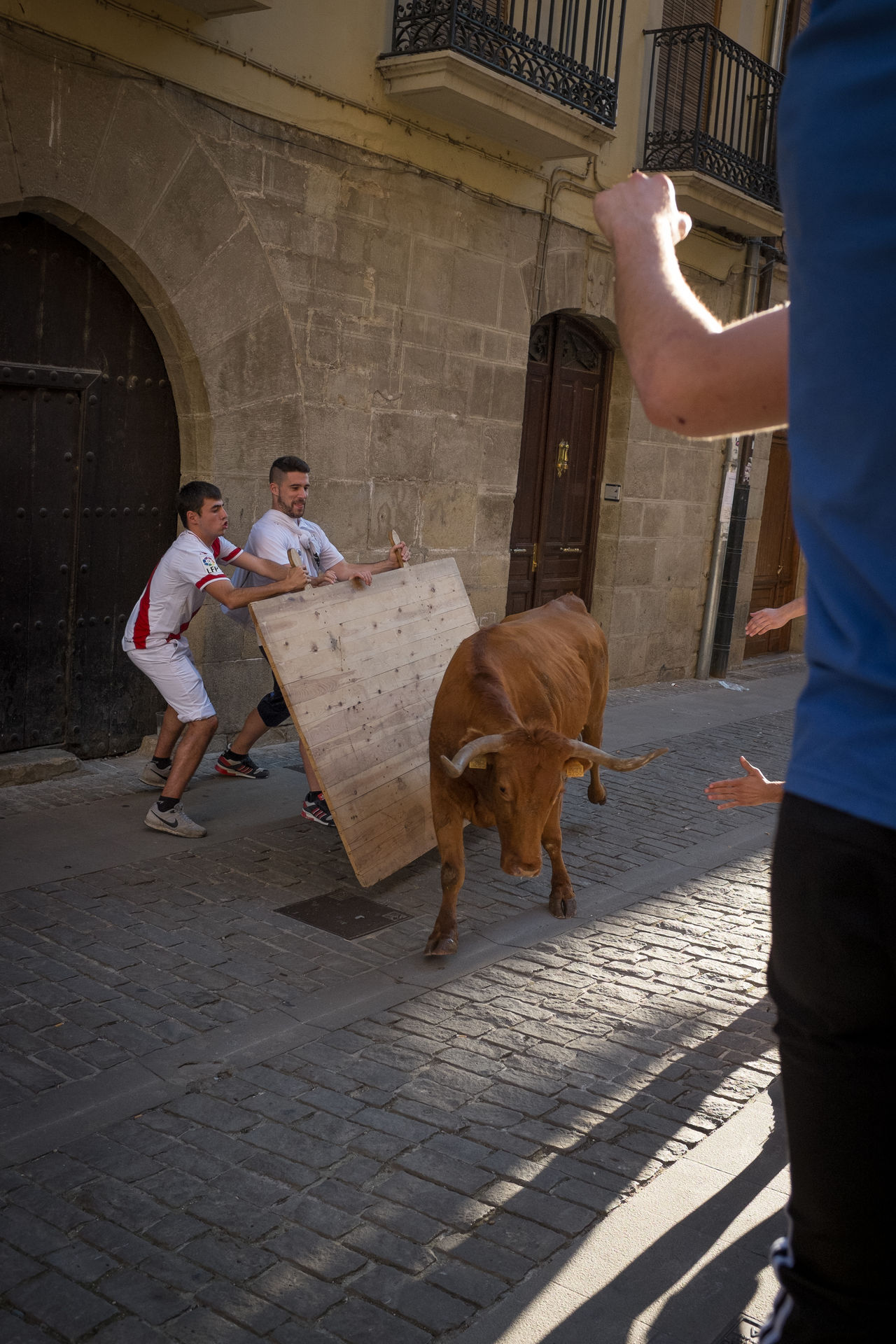 These two guys were full of bravado all the while they were stood behind their large slab of timber, then suddenly, once the young bull came careering down the cobbles, their faces changed in an instant. Cheered on by their friends, they withstood about 6 or 7 passes by the bull as it got progressively more tired. Bull Bull Run Bull Running Charge Puente La Reina SPAIN Streetphotography The Street Photographer - 2016 EyeEm Awards Youths