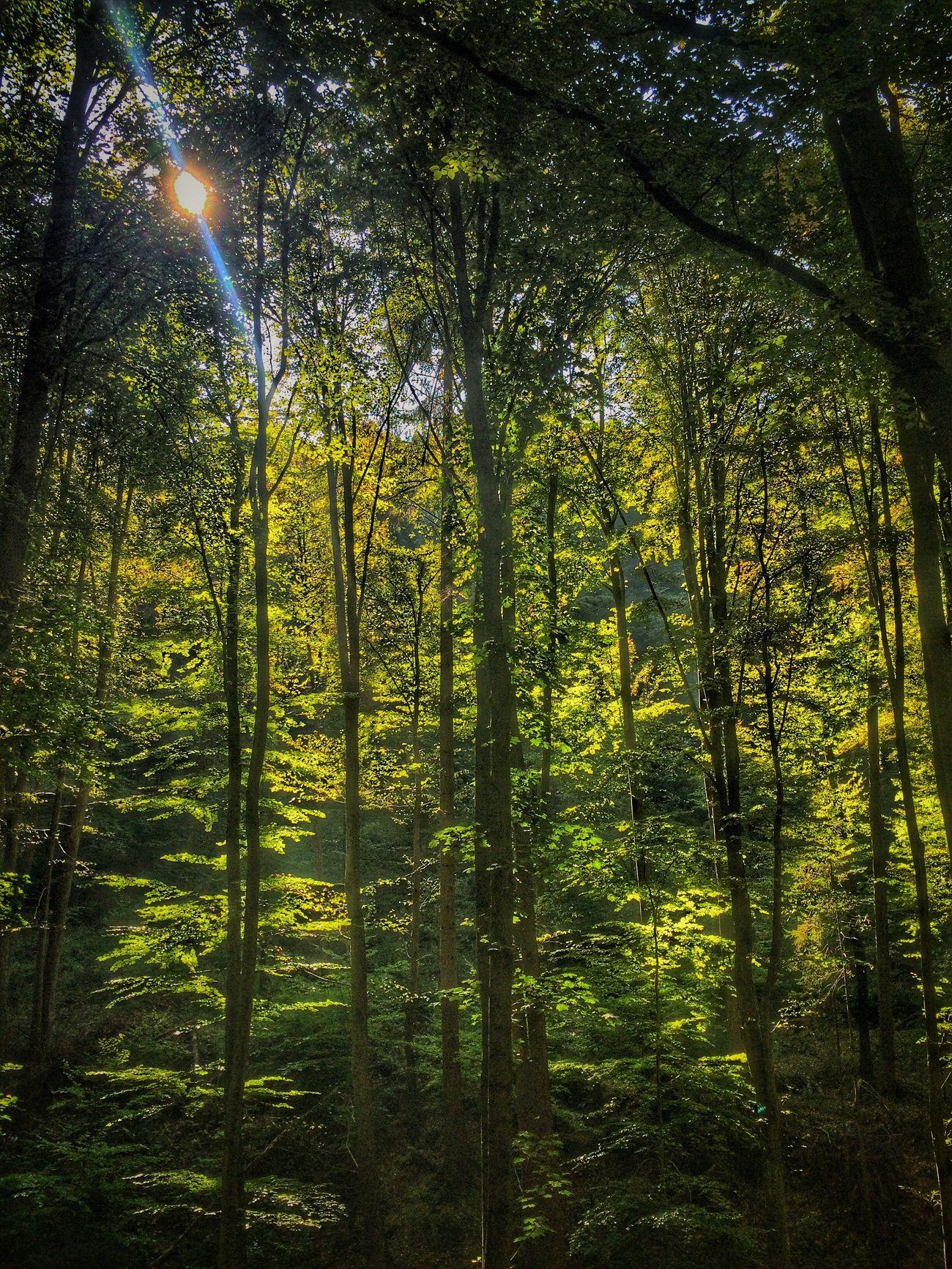 Nature Pustyhrad Green Zvolen Slovakia Slovaknature Tree WoodLand