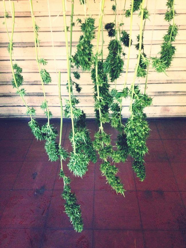 Smoke Weed Marijuana 420 Smoker