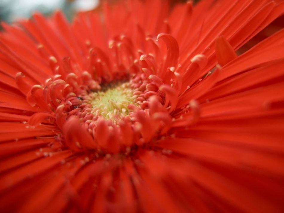 Red Flowerporn Flowers,Plants & Garden Flower Collection EyeEm Flower Eye4photography  EyeEm Nature Lover EyeEm Best Shots