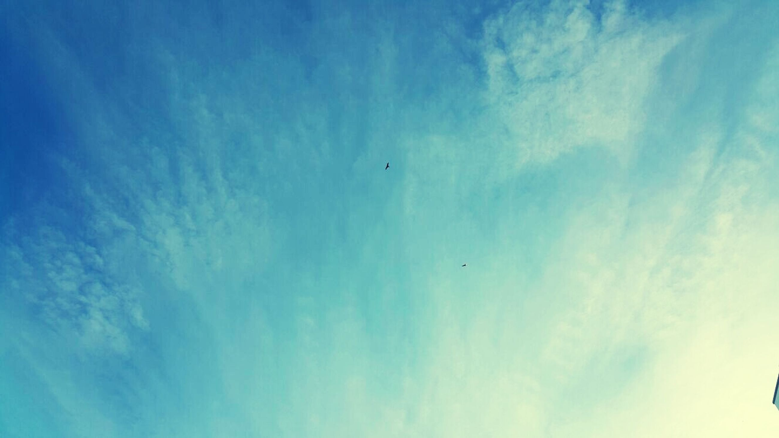 low angle view, flying, sky, cloud - sky, blue, animal themes, bird, mid-air, beauty in nature, nature, wildlife, tranquility, animals in the wild, cloud, scenics, cloudy, tranquil scene, outdoors, no people, day