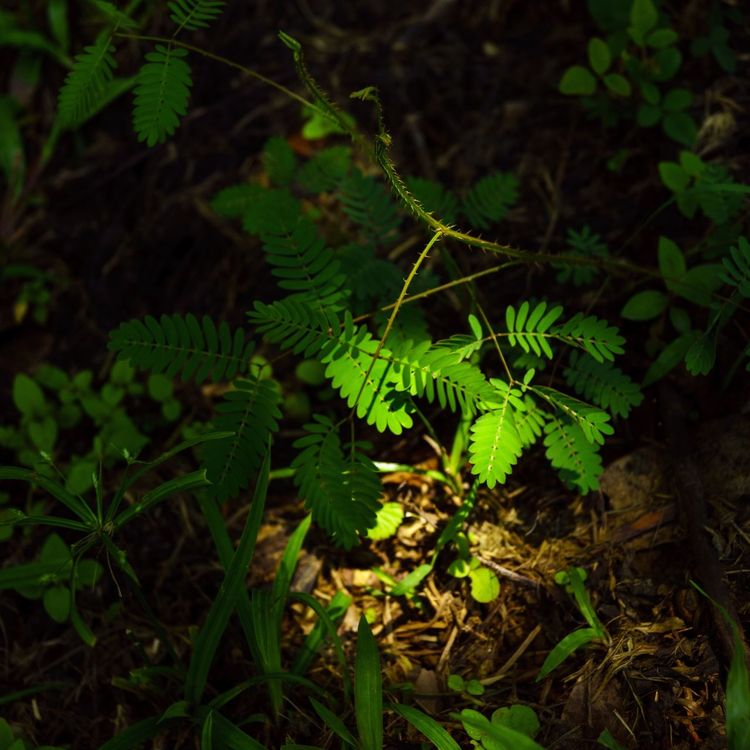 Growth Nature Green Color Leaf Plant Fern No People Outdoors Beauty In Nature Day Close-up Fragility Freshness