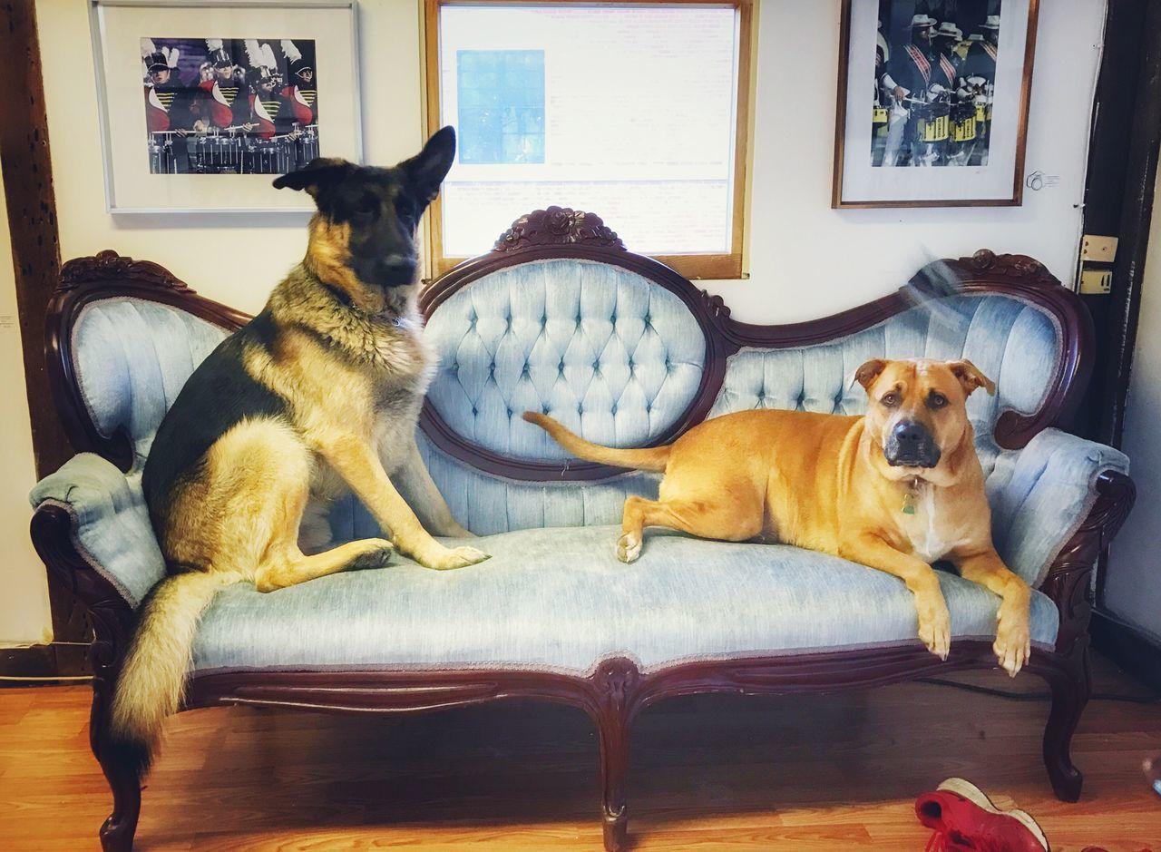 Studio Dogs Capecod Dogs Of EyeEm StudioLife