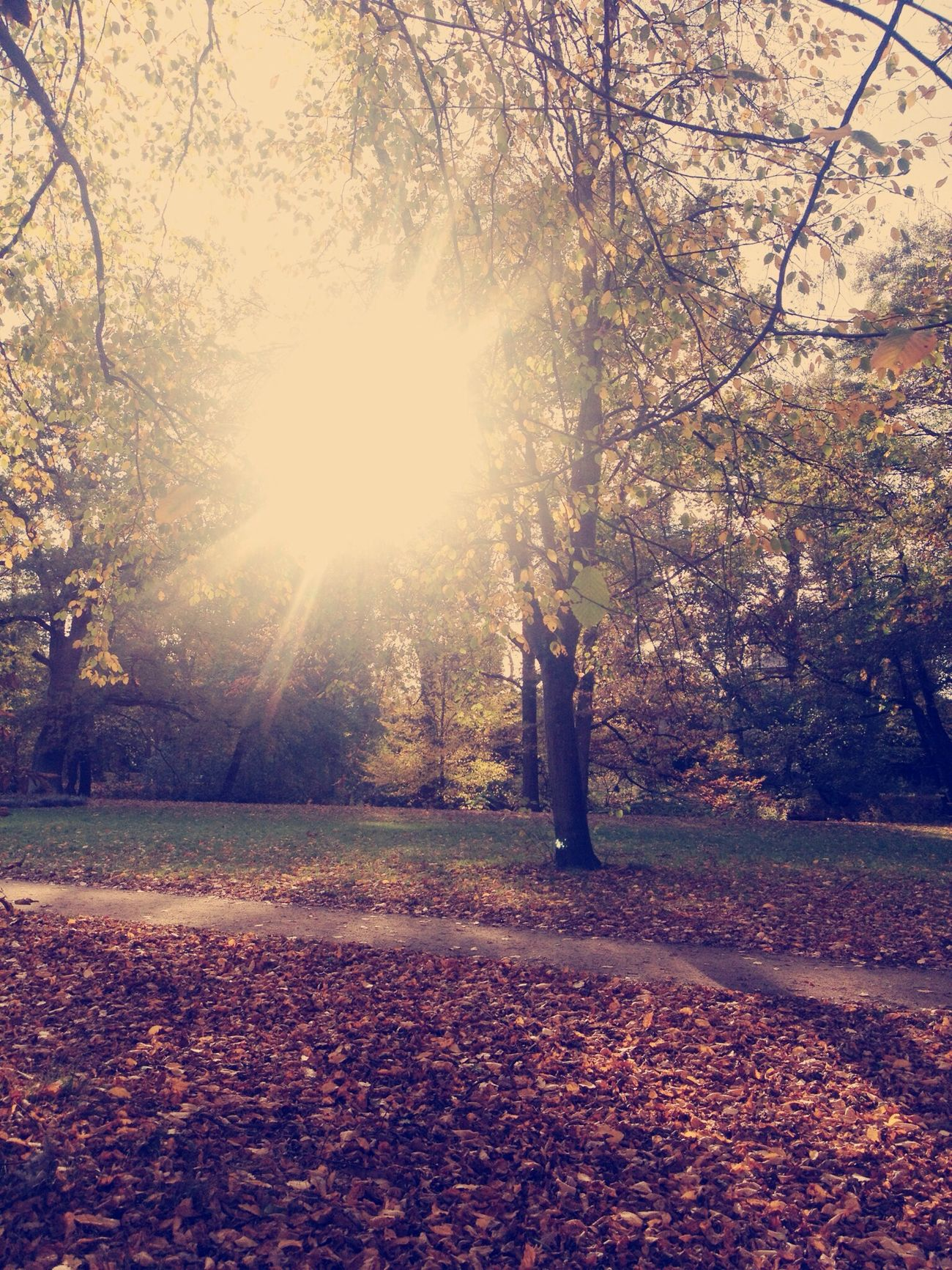 Colors Of Autumn Sunny Day Autumn