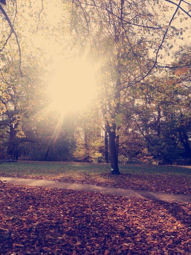 Colors Of Autumn Sunny Day Autumn