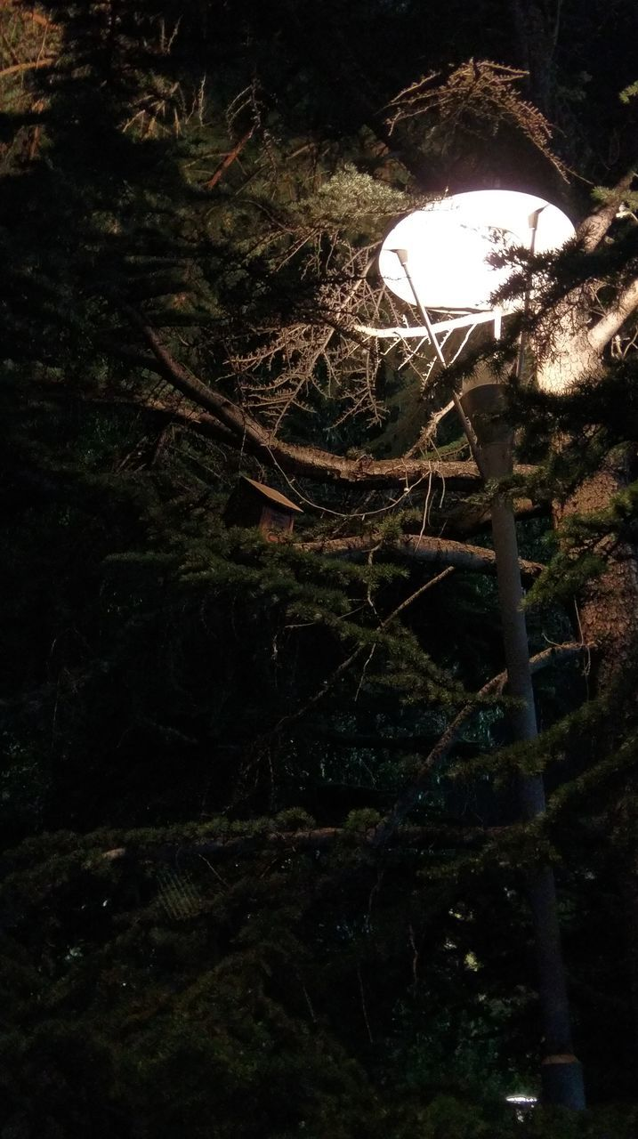 tree, no people, growth, night, nature, forest, outdoors, illuminated, close-up, branch, plant, beauty in nature, fragility, toadstool
