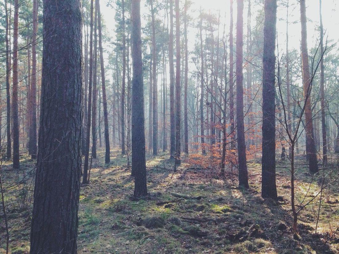 Sightseeing Berlin Trees