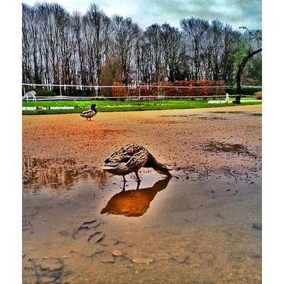England Spalding  Lincolnshire Springfields ingiltere instaphoto ig_photo ig_mood instamood instadaily igdaily instacool instagood tagsforlikes aniyakala objektifimden bir_dakika zamanidurdur mekanim picoftheday photooftheday