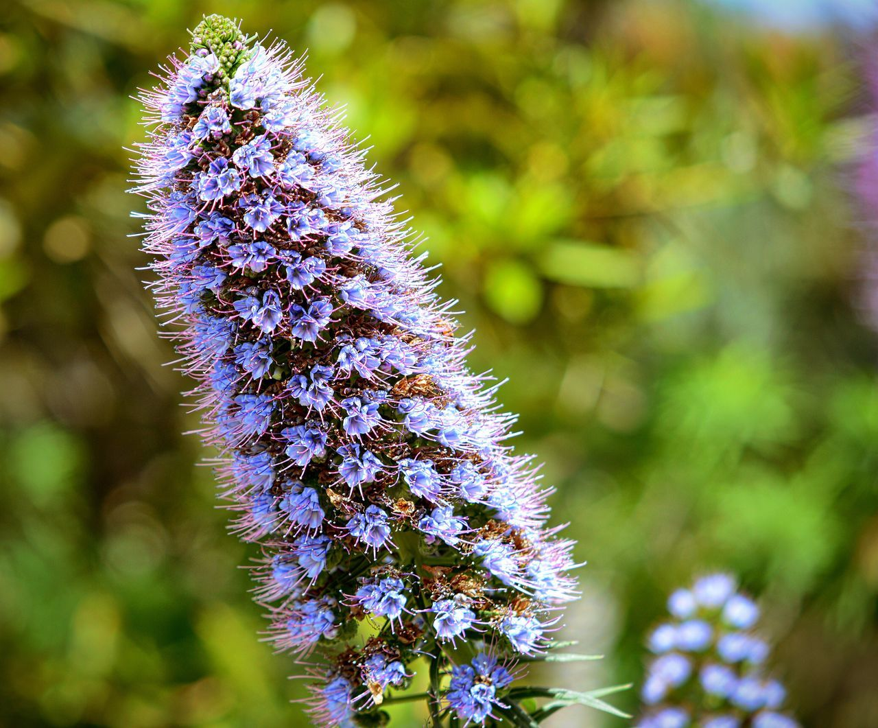 Nature Growth Flower Blue Freshness Purple Plant Beauty In Nature Fragility No People Close-up Flower Head Outdoors Day