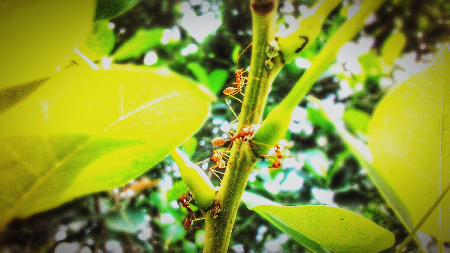 Macro Beauty First Eyeem Photo