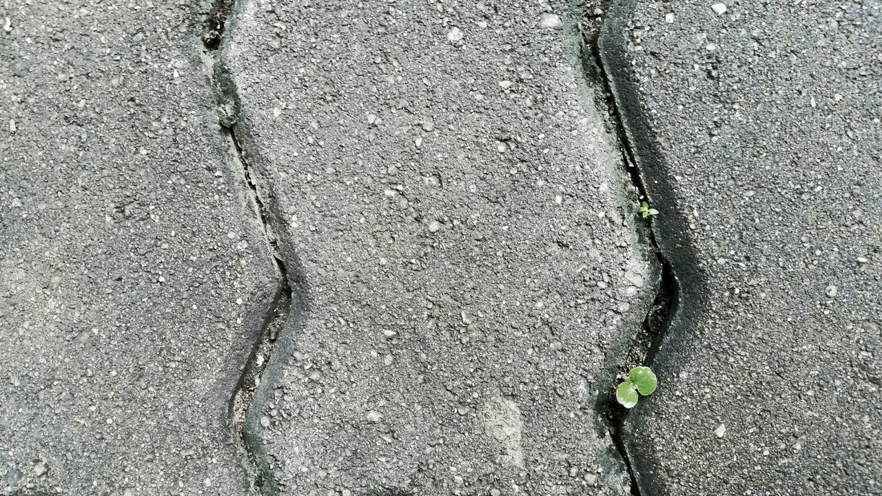 Directly Above Shot Of Plant Growing On Footpath