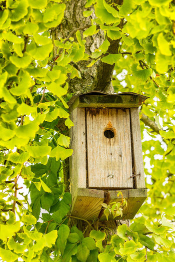 Bat Bat Box Beauty In Nature Botany Built Structure Close-up Day Focus On Foreground Green Green Color Growth Hidden Ivy Leaf Nature No People Outdoors Plant Tranquility Tree Wood Wood - Material Wooden