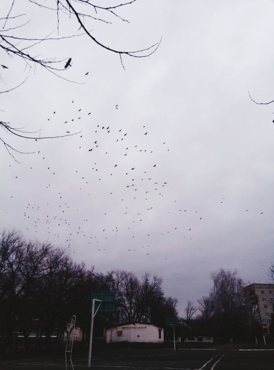 sky, flying, tree, bird, large group of animals, no people, flock of birds, nature, outdoors, water, beauty in nature, animal themes, day