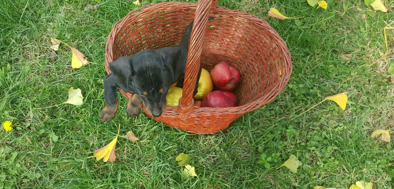 EyeEm Nature Lover Grass Green Color Dog❤ Little Black Dog Animals Of Eyeem Fruit Food Apples Red Leaves Nature Multi Colored Colors Of Autumn No People Nofilternoedit