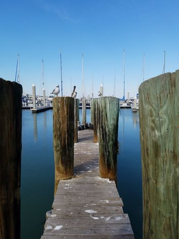 Tunnel Vision Pier Waterfront Outdoors Beauty In Nature No People Nature Pelicans On Posts Sea Gull Marina Downtown Beautiful Boats Fisherman's Wharf Water Like Glass Reflections Blue Skies