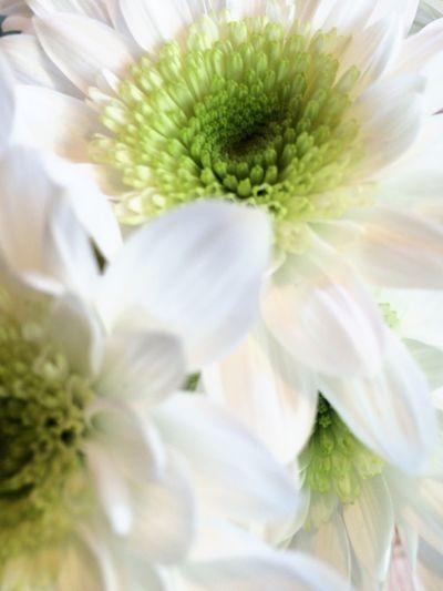 Nature alwys provides its purest beauty Flow  Flowerporn Natureis