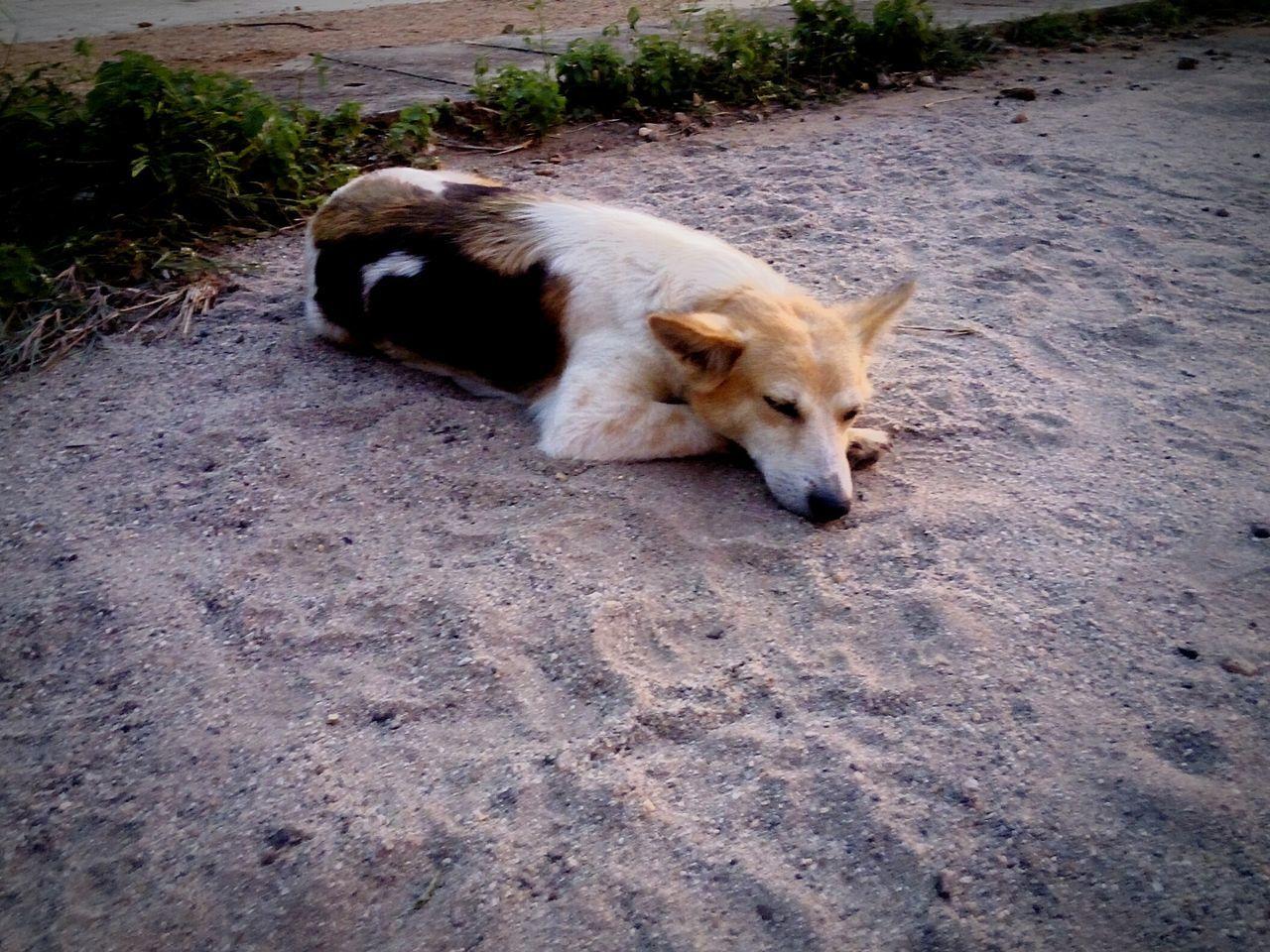 Alone dog thinking evening