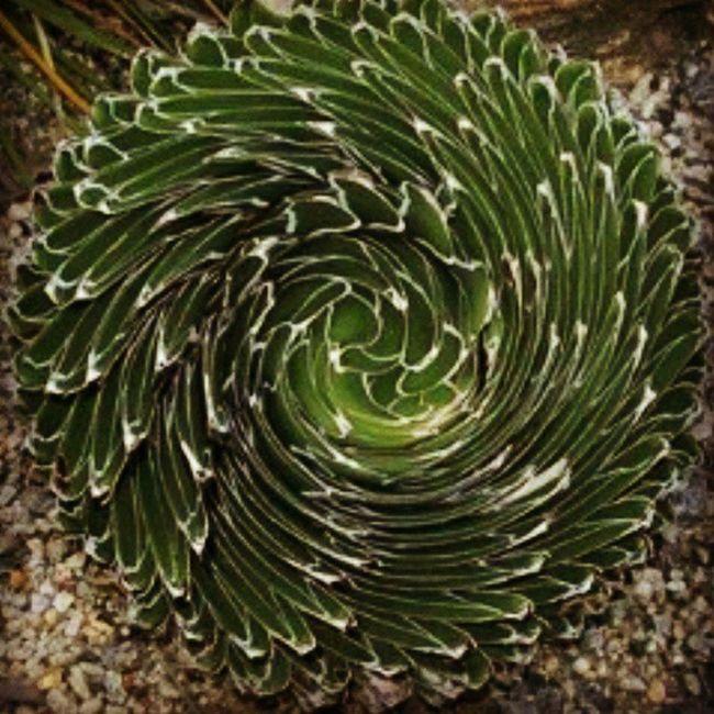 Green Circling Flower Natural Beauty