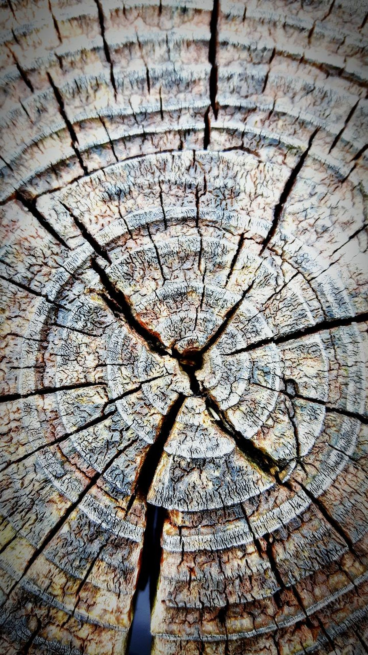Full Frame Backgrounds No People Day Cracked Textured  Pattern Sunlight Wood - Material Shadow Outdoors Concentric Close-up Tree Ring Nature Tree Abstract Wallpaper Spotted Sparse Textured  Nature