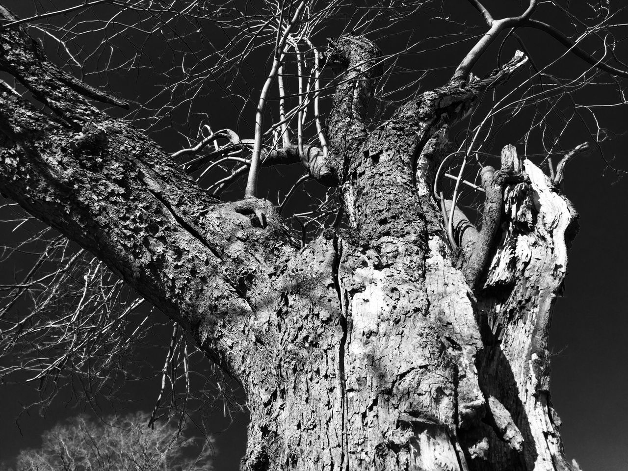 tree, tree trunk, no people, branch, outdoors, textured, day, close-up, nature, dead plant, wood - material, dried plant, dead tree, animals in the wild, animal themes