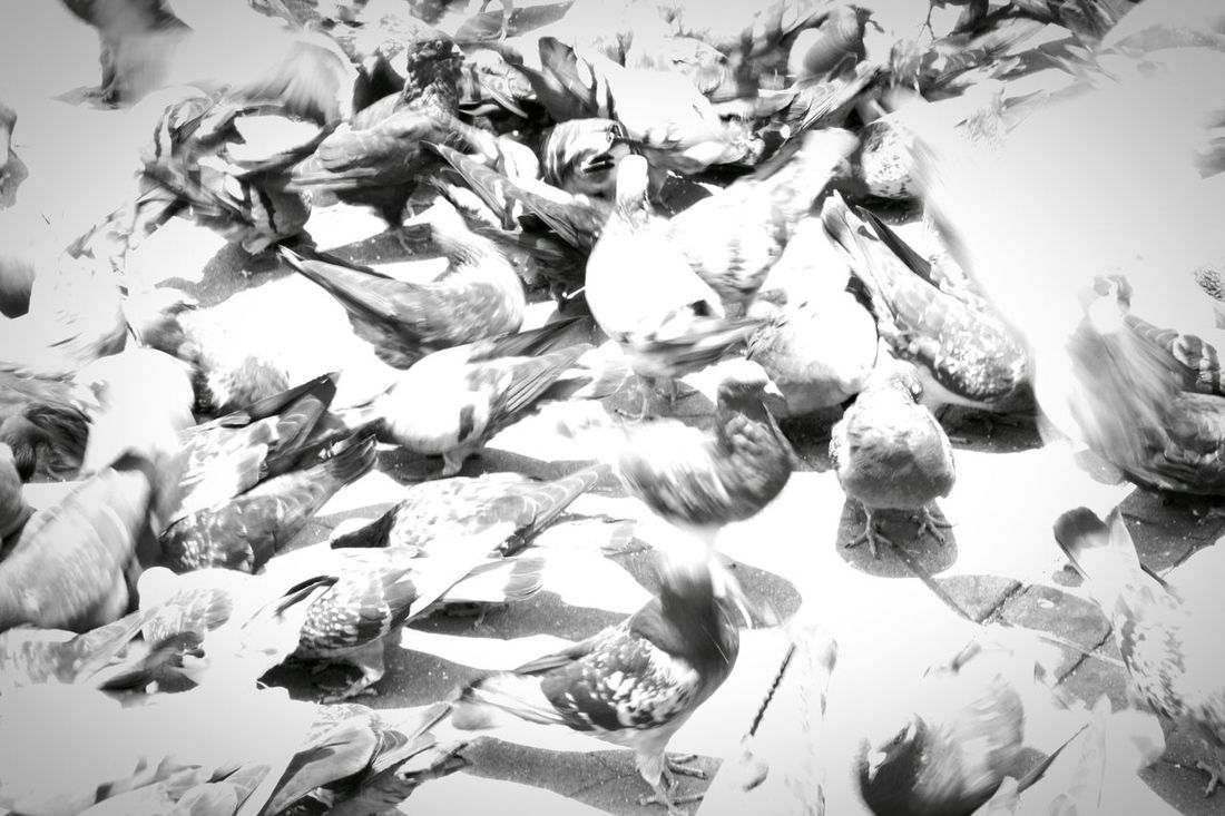maybe this would be the day when we finally realize that we are not the only ones!!! Masive Swallows Bw Ground Relaxing Taking Photos Check This Out Hello World Dinamic Keep Dreaming