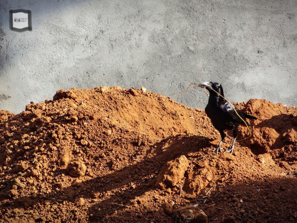 The KIOMI Collection Drylandscape Builder Nestmaker Crow Shiro