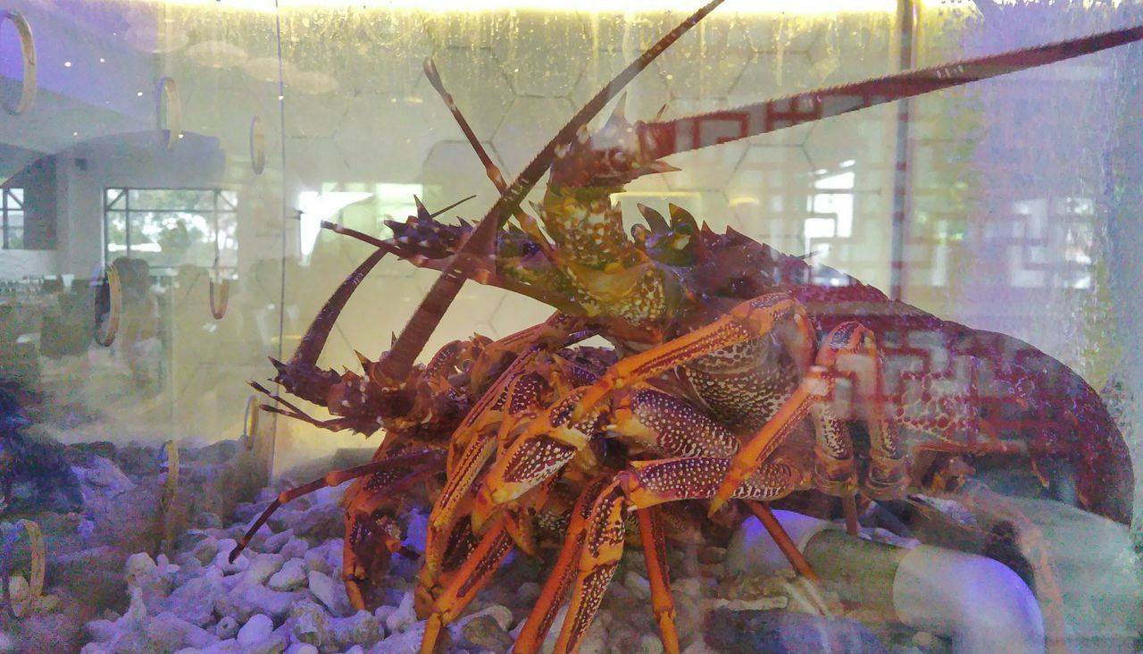 Lobsters Chinese Restaurant Yum Cha Fish Tank Restaurant Sea_food
