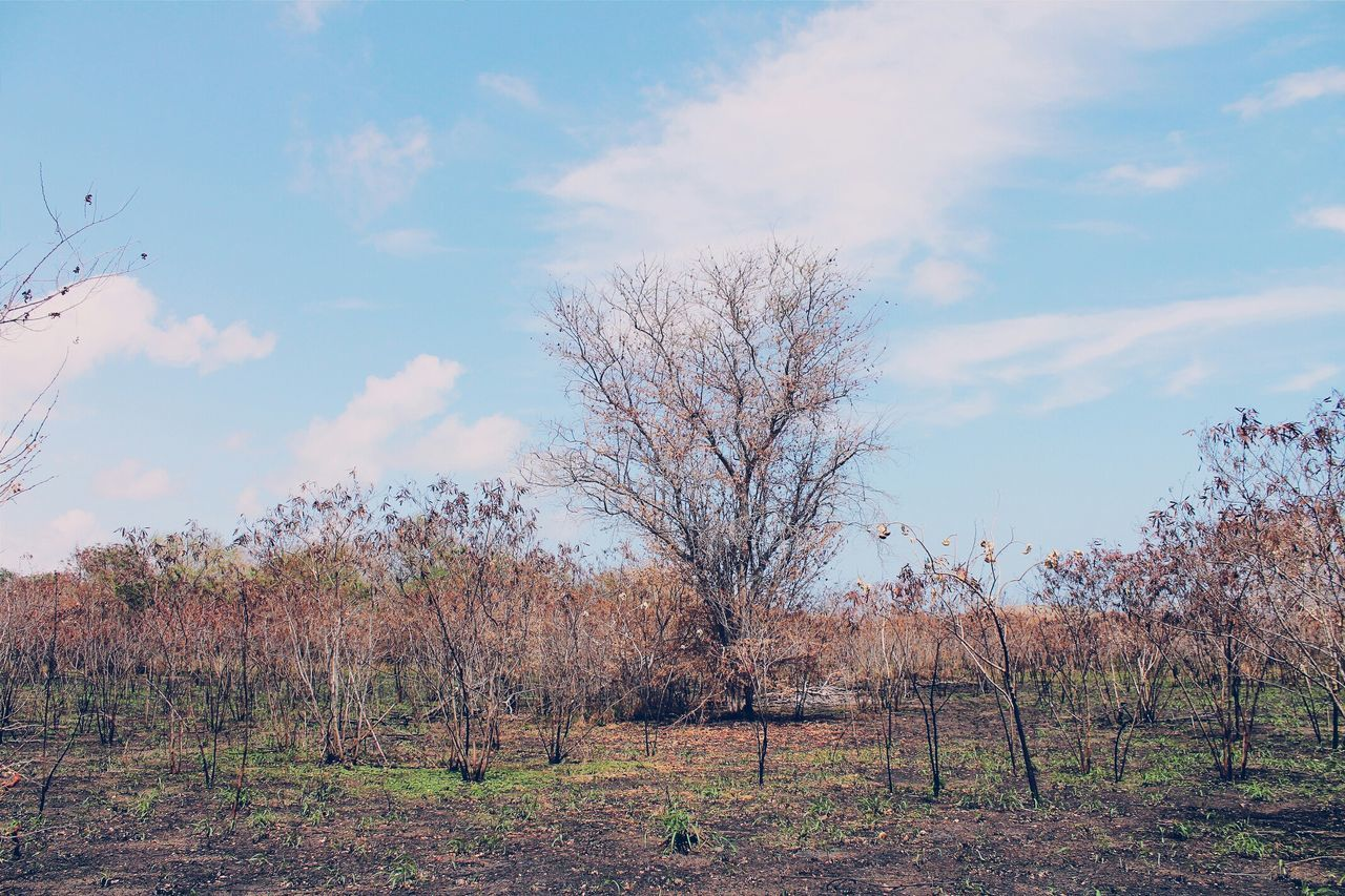 Vscocam The Minimals (less Edit Juxt Photography) Dreaming Of RainAfter The Fire The Drought We Need Rain How Do You See Climate Change? Learn & Shoot: Simplicity Colour Of Life