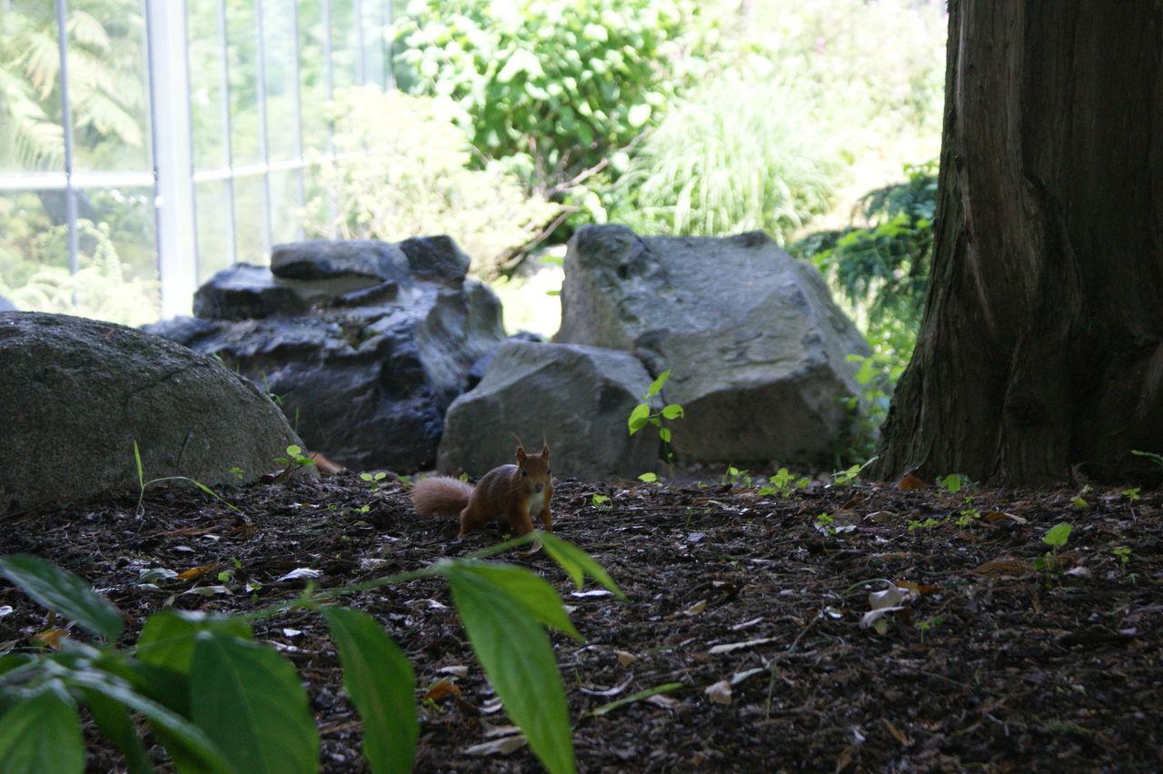 Portrait Of Squirrel Sitting On Field