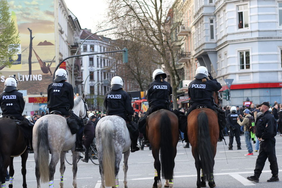 Beautiful stock photos of police, Animal Themes, Authority, Day, Five Animals