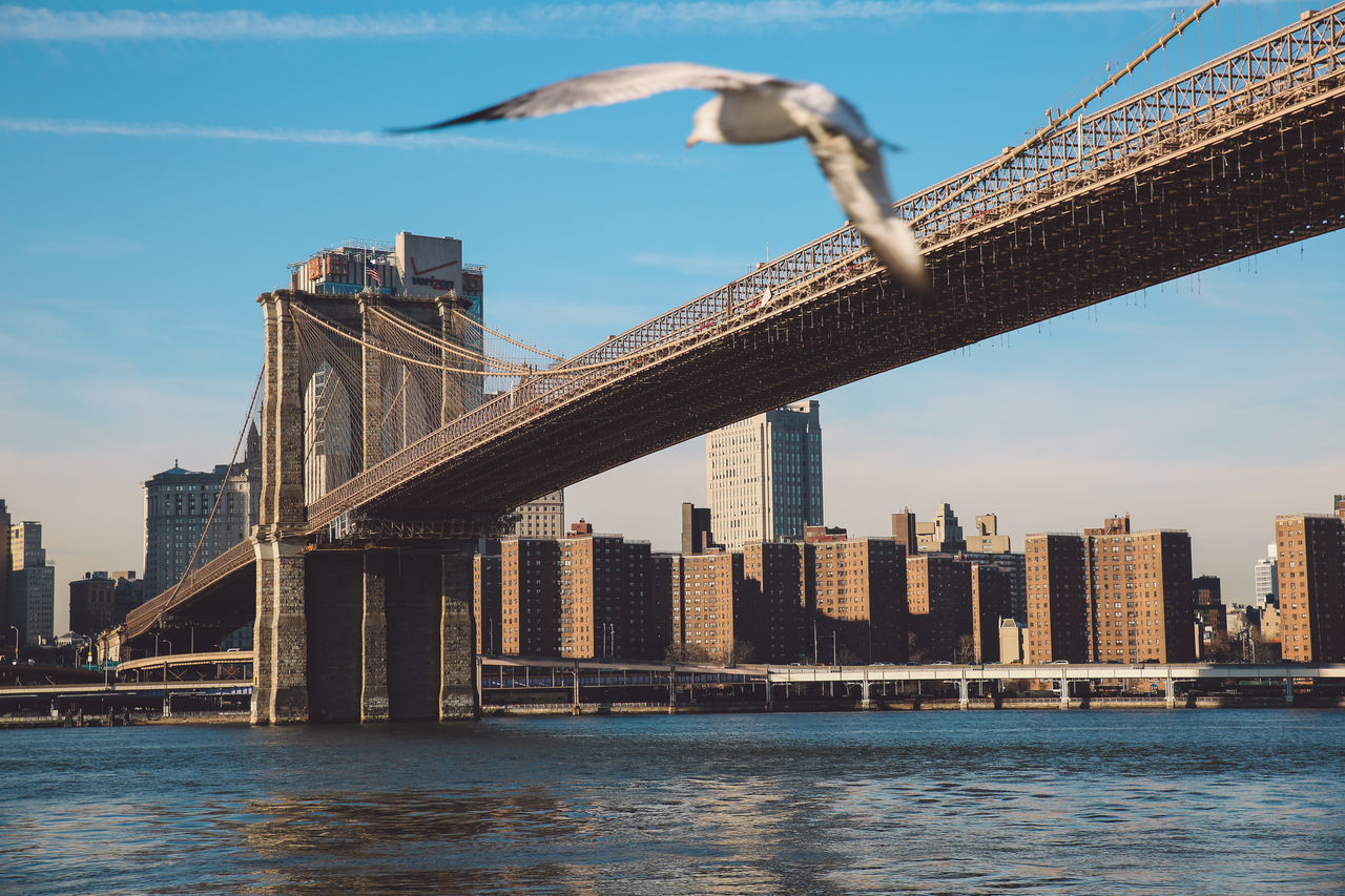 Architecture Bridge - Man Made Structure Brooklyn Bridge  Brooklyn Bridge / New York City Day Low Angle View Manhattan New York New York City No People NYC Outdoors Photobomb River Seagull Sunny Sunset Winter