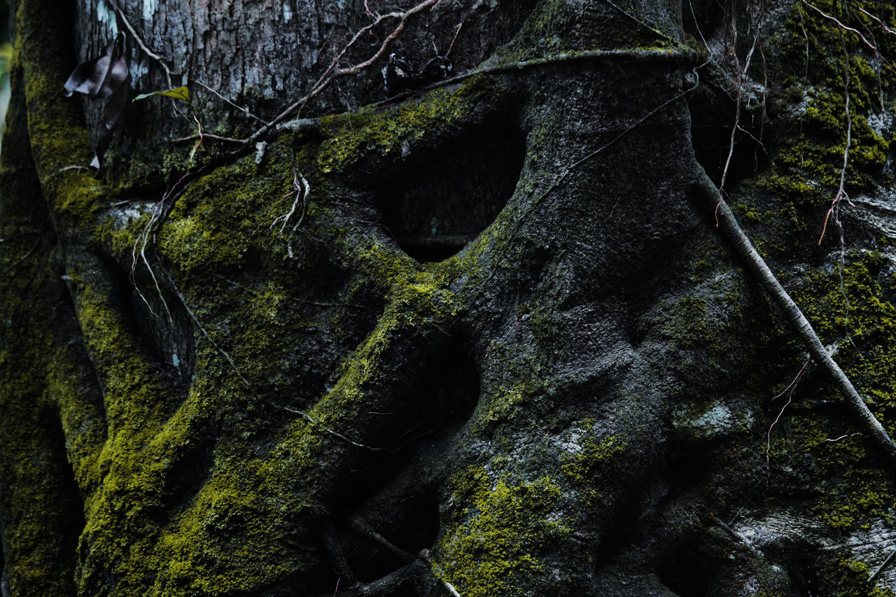 moss, rock - object, nature, tree trunk, no people, root, day, forest, outdoors, tree, beauty in nature, close-up