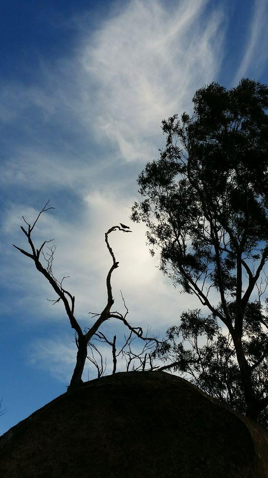 """Magpie at Bunjil's Cave"" Spirit Of The Bush ... 🌌 https://en.wikipedia.org/wiki/Bunjil 🌌 The Great Outdoors With Adobe Bunjil's Shelter Black Ranges Exceptional Photographs The Great Outdoors - 2016 EyeEm Awards EyeEm Best Edits EyeEm Gallery Australian Landscape Australia❤️ Enjoying Life AndroidPhotography Eye4photography  Landscape_Collection Sacred Places"