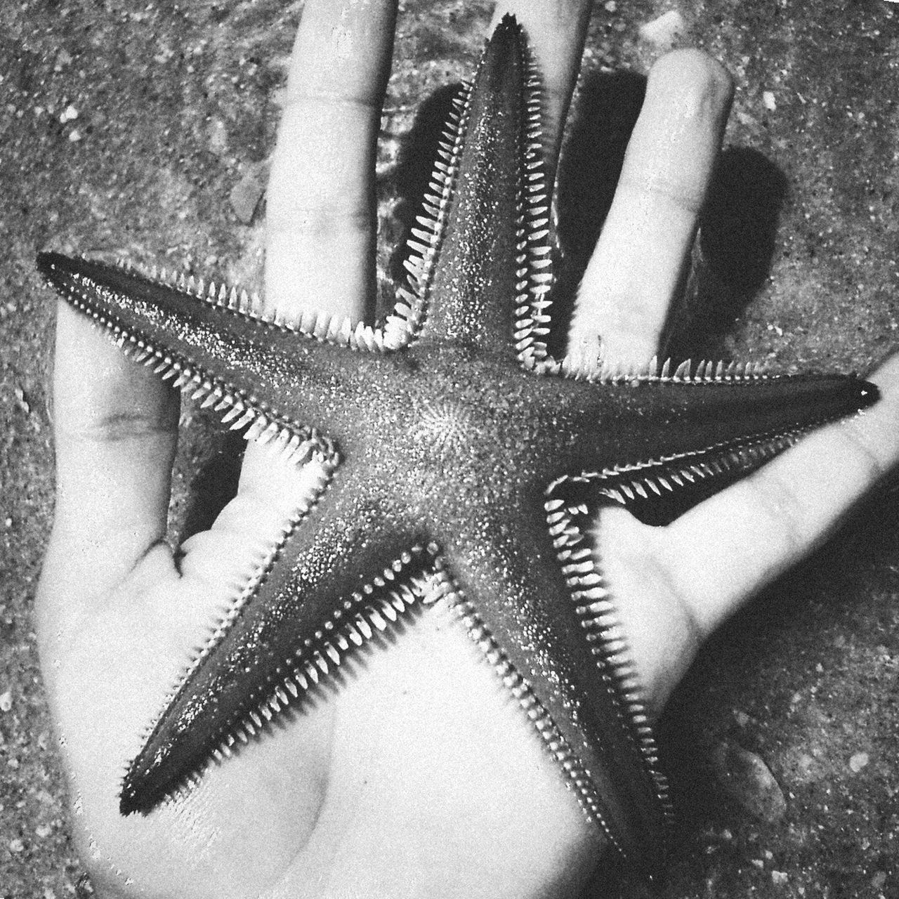 High Angle View Close-up Person Star Shape Nature Extreme Close-up Focus On Foreground Monochrome Photography Black And White Starfish  Starfish At Beach Hand One Person Nature Rescue Sealife Star Stars Algarve Holiday Beautiful EyeEm Best Shots Beach in Faro , Portugal