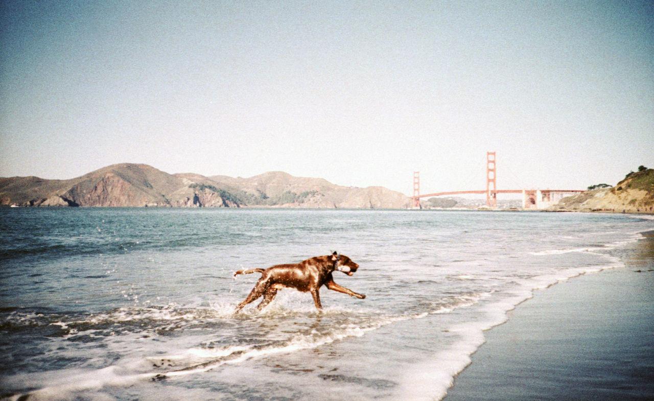 Beautiful stock photos of san francisco, Agility, Animal Themes, California, Connection