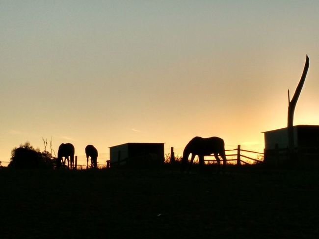 Getting Away From It All Horse & Foals Horse&foals Autumn Evening End Of The Day Feeding Horses Loving Life  My Life nightfall dusk sunset