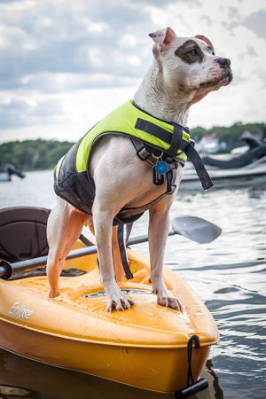 One Animal Dog Animal Themes Pets Outdoors Domestic Animals Day Water Sea No People Mammal Sky PitBullNation