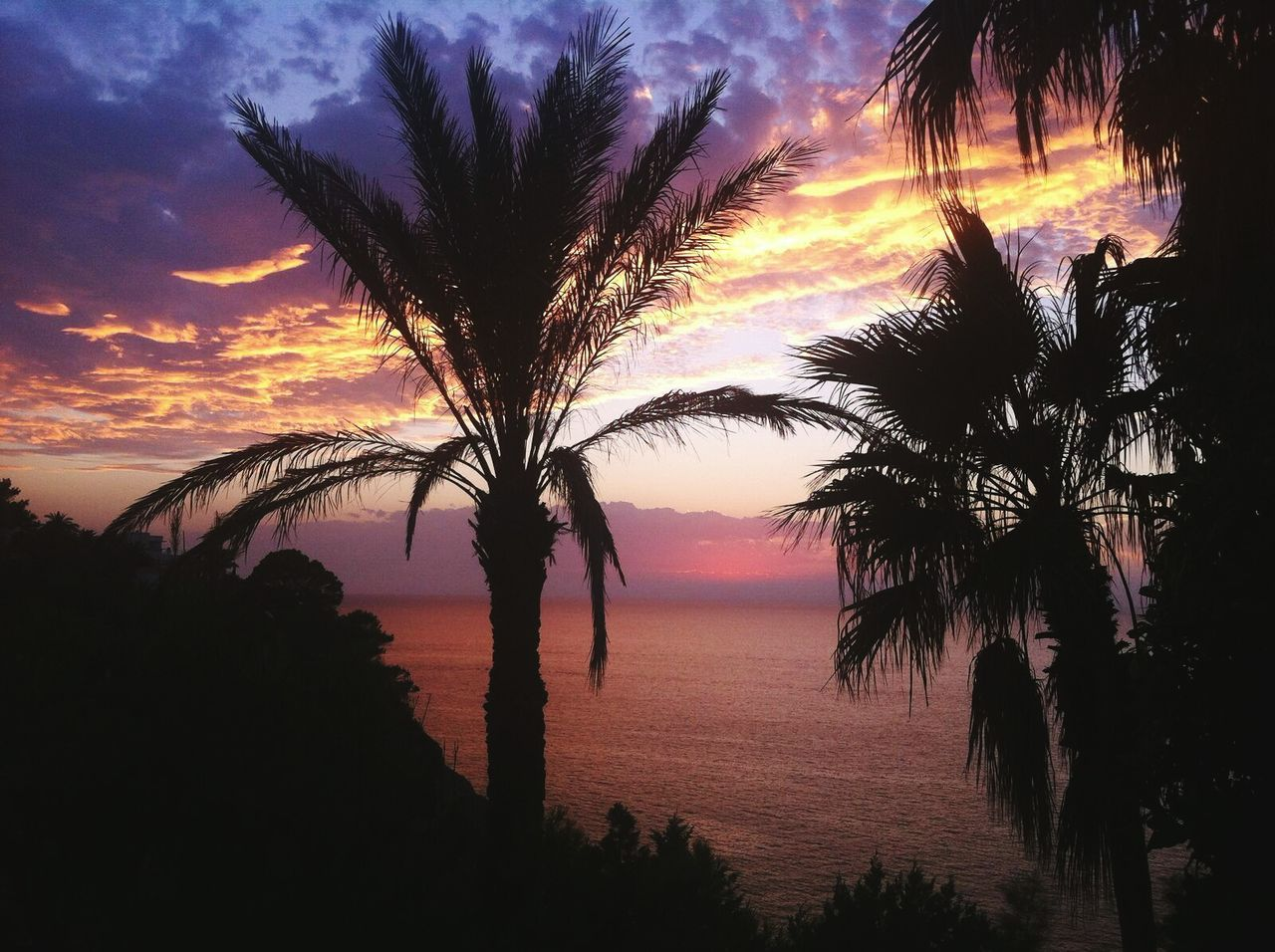 Sunset Palm Tree Tranquil Scene Sea Water Beach Dramatic Sky Horizon Over Water Colorful Sky Sunset Silhouettes Sunset Palm Tree Orange Gold Sunsetporn Ibiza Sunset Cala Cliff Majestic Cloud - Sky Nature Sunset View Sunset Colours Tranquility