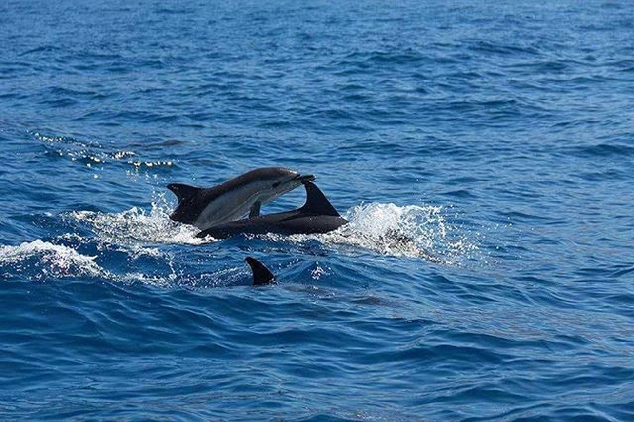 ¡Hola! Delfin Delfines  Viaje Travel Naturaleza Natura Color Colour Visto en Tenerife Canon60d