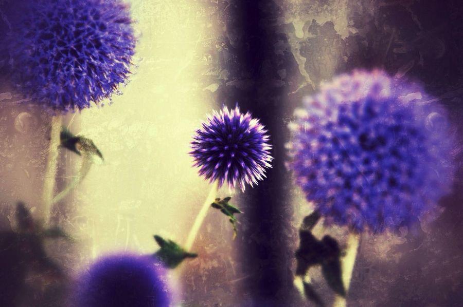 Star Flower EyeEm Nature Lover