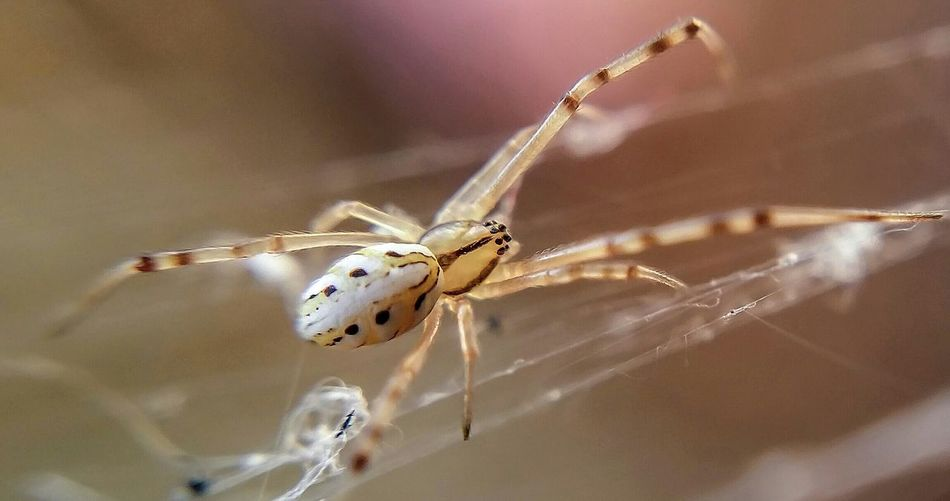 Beautiful stock photos of spider's, Animal Themes, Animals In The Wild, Close-Up, Day
