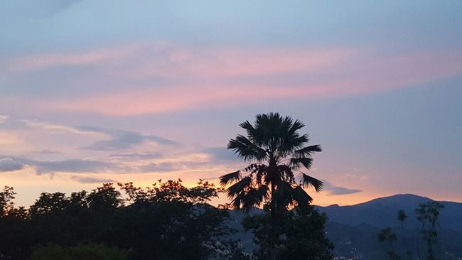 Sunset series .2 Envigado Colombia Myhome Beautiful Sunset Notfilter Tree Treshouserealty First Eyeem Photo