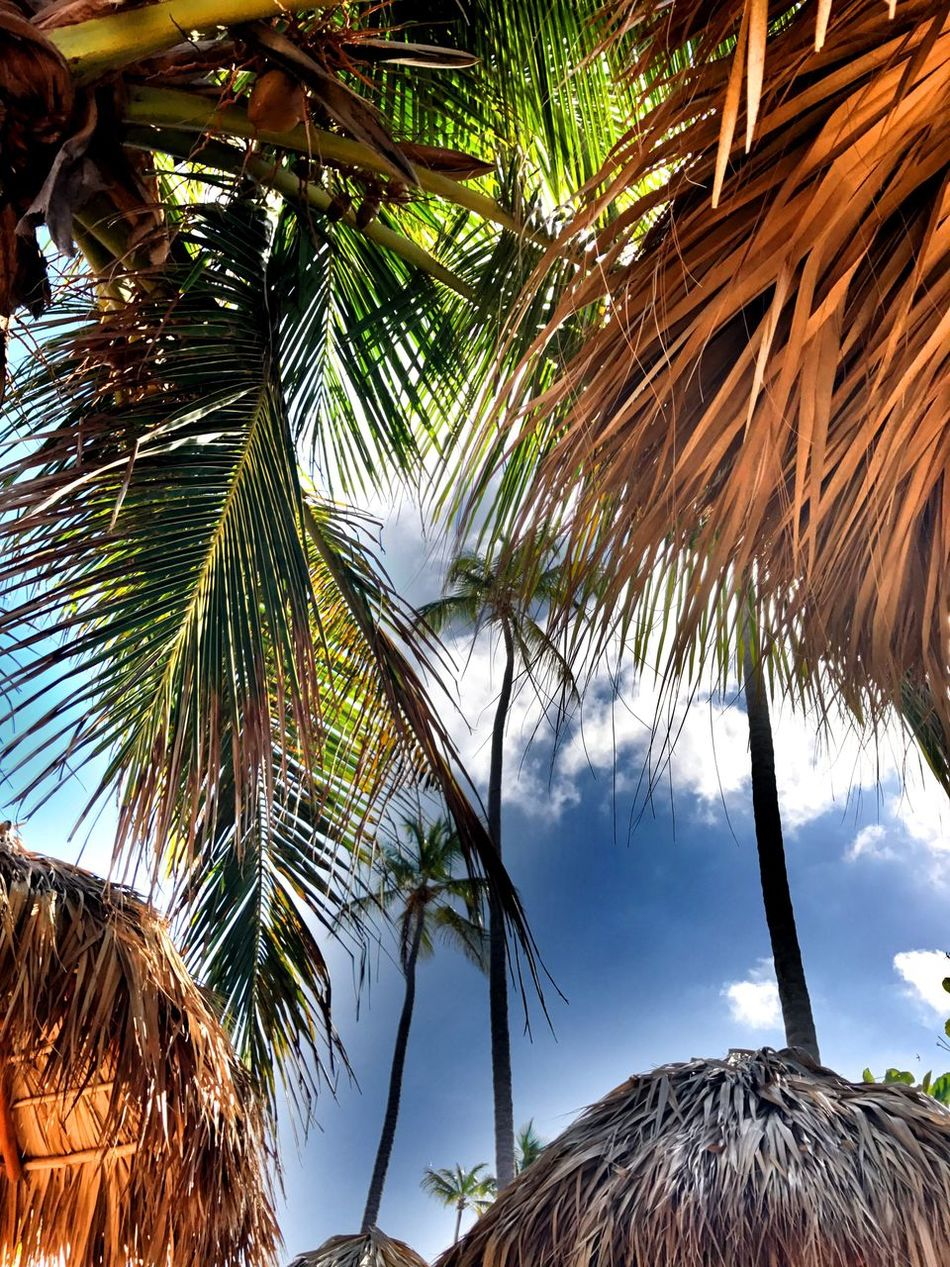EyeEmNewHere Palm Tree Tree Nature Sky Tranquility Scenics Beauty In Nature No People Growth Sea Tropical Climate Branch Outdoors Palm Frond Day