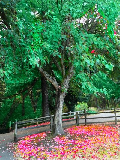 Veiwpoint Of A Homeless Seattle Girl Nature ShotoniPhone6s Tree Beauty In Nature Park - Man Made Space Nature Multi Colored Seattle, Washington