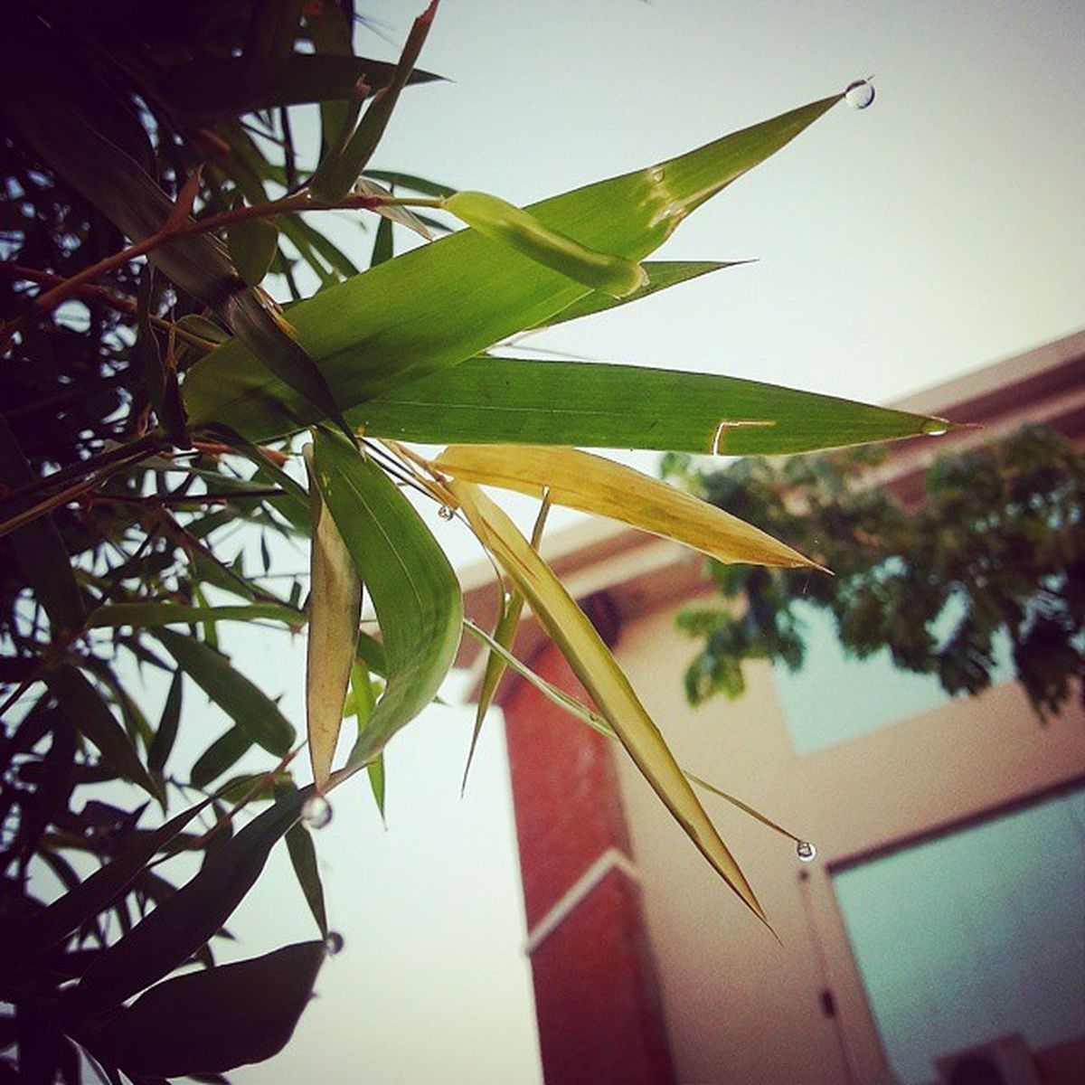 A Perfect Sunday Morning! Dewdrops Bamboo CollegeBuilding Note3only