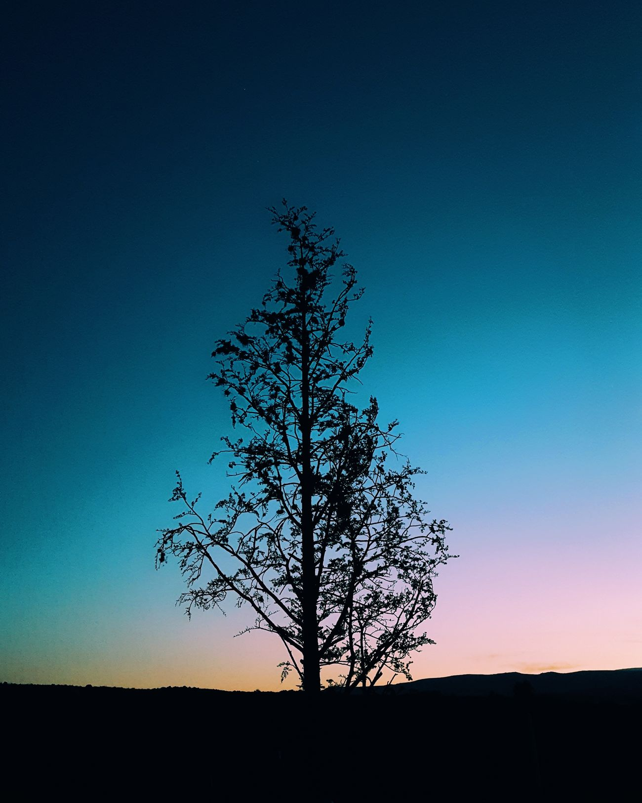 Tree Silhouette Landscape Tranquil Scene Tranquility Blue Clear Sky Beauty In Nature Nature Single Tree Bare Tree Branch Phoneography PhonePhotography Phone Relaxing