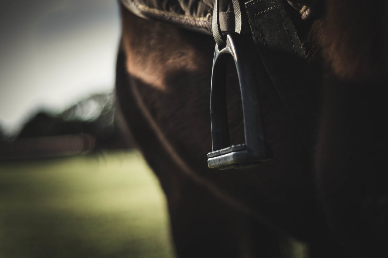 "I never knew it was called ""Stirrup"" :) Animal Themes Close-up Day Domestic Animals Farm Focus On Foreground Girth Horse Mammal No People One Animal Outdoors Saddle Sky Stirrup"
