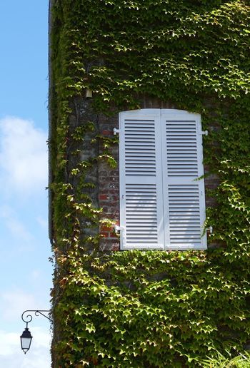 Window Architecture Built Structure Building Exterior Street Light Ivy Ivy Covered